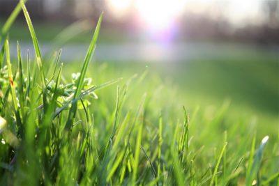 close up shot of blades of grass